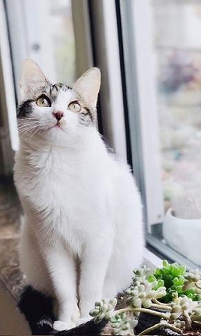 猫咪与小雏菊